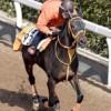 中日新聞杯予想を川田将雅騎手を中心に語ってみます