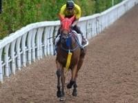 今週から開幕|中京競馬場騎手データまとめ(12月~3月)