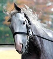ゴールドシップ、有馬記念最後は内田博幸