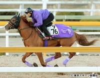 日経新春杯【2016年】|日経新春杯に向きそうな騎手